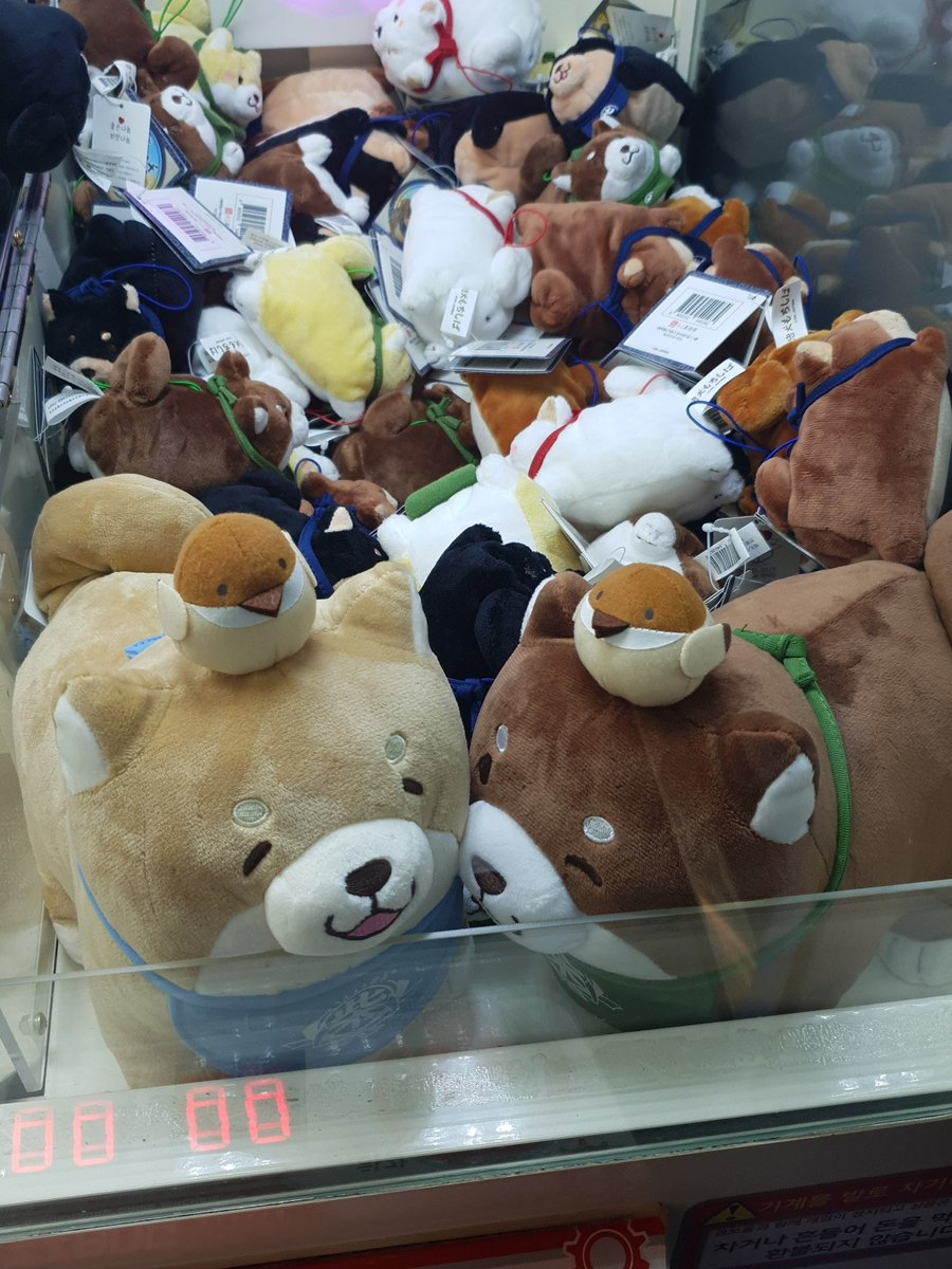 They have Shiba Inu with a bird on top of its head  <br>http://pic.twitter.com/vs64foPBAP