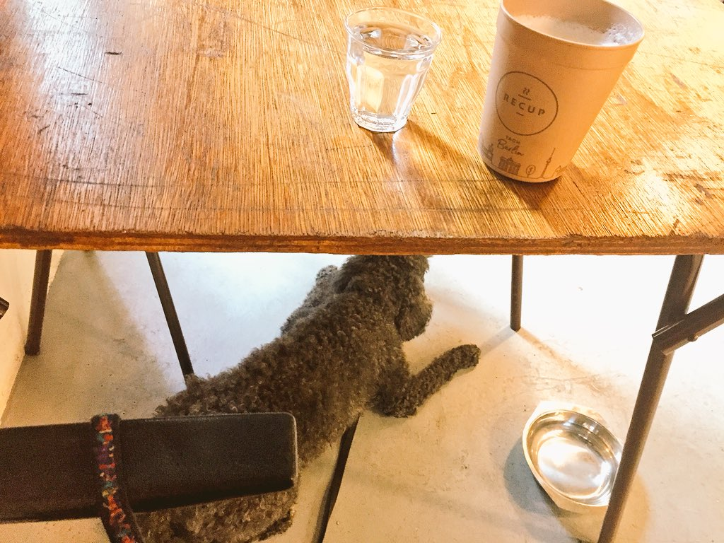 #Kaiser is getting the special treatment at @heiligeboontjes #cafe in #rotterdam .. pre @POferriesupdate @POFerriesNL treats for him &amp; lecker #coffee for me in my @recup2go cup. #sustainabletravel #sustainablelife #mykaiser #dogtravel .. delays are only opportunities to explore. <br>http://pic.twitter.com/oCHSpAaosy