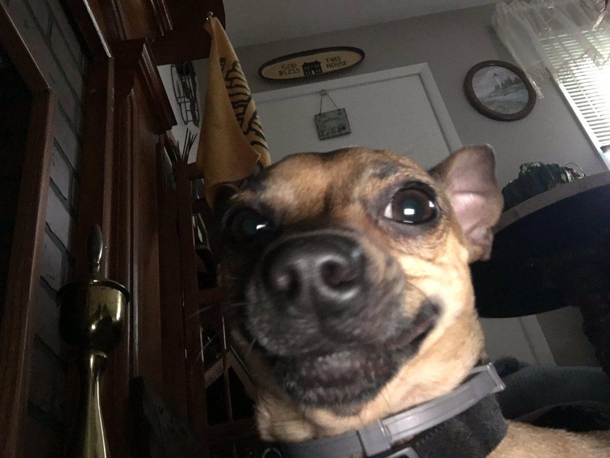 my dog is smth else