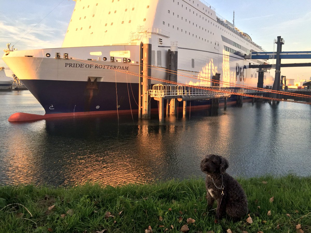 Pre sail walkies &amp; quick pose in front of the @POferries #prideofrotterdam - before we set off for the U.K. Thanks again to staff from @POferriesupdate &amp; those onboard who have kindly assisted in the journey so far. #dogtravel #sustainabletravel #mykaiser #takeyouwithmenexttime<br>http://pic.twitter.com/uWe0B6HA9Q &ndash; à Rotterdam Harbour