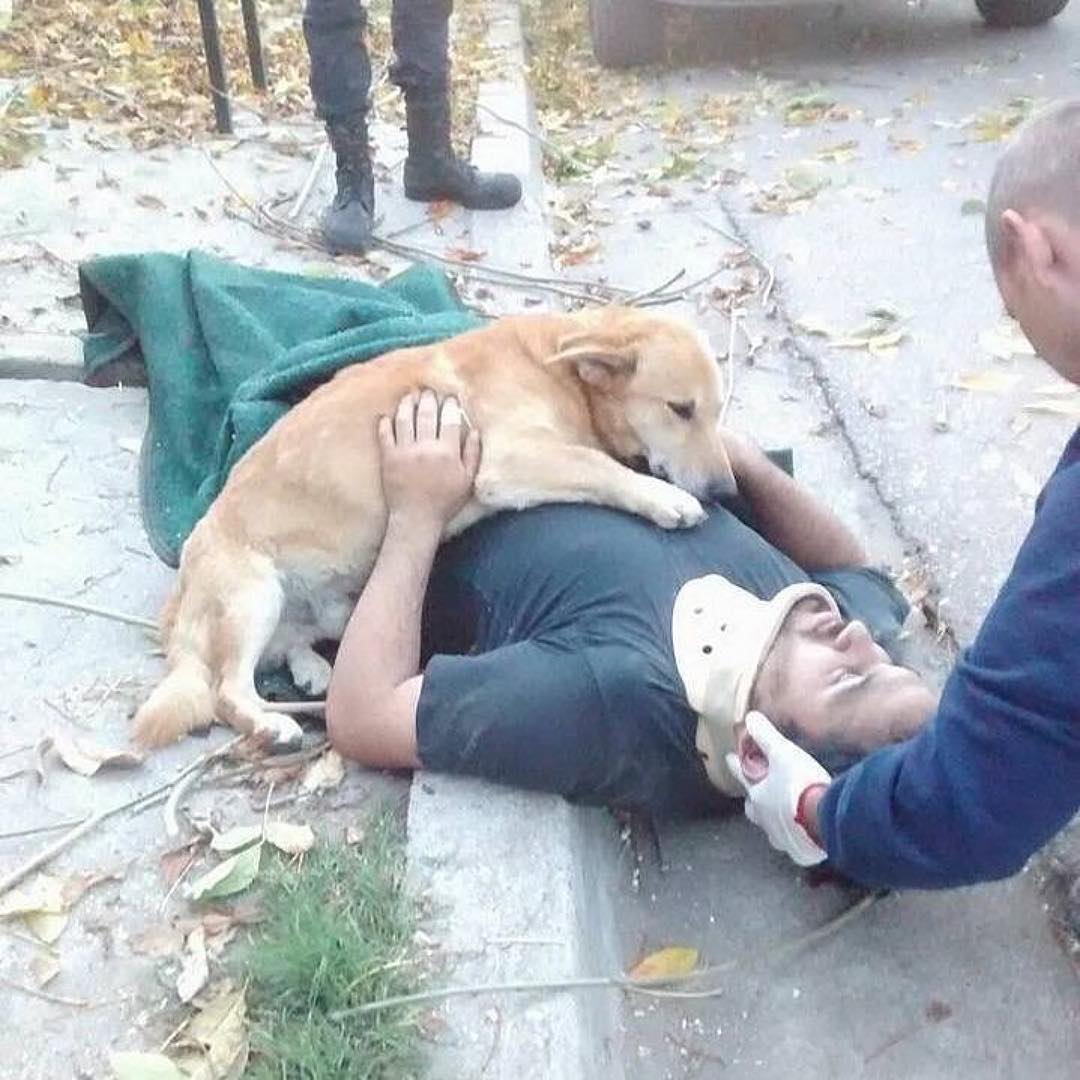 This loyal dog refused to leave his unconscious owner until help arrived. Photos of the touching scene, showing the dog embracing his owner after his head hit the pavement, have gone viral. #cutedogs #puppylove #animals<br>http://pic.twitter.com/6qPNCauAsm