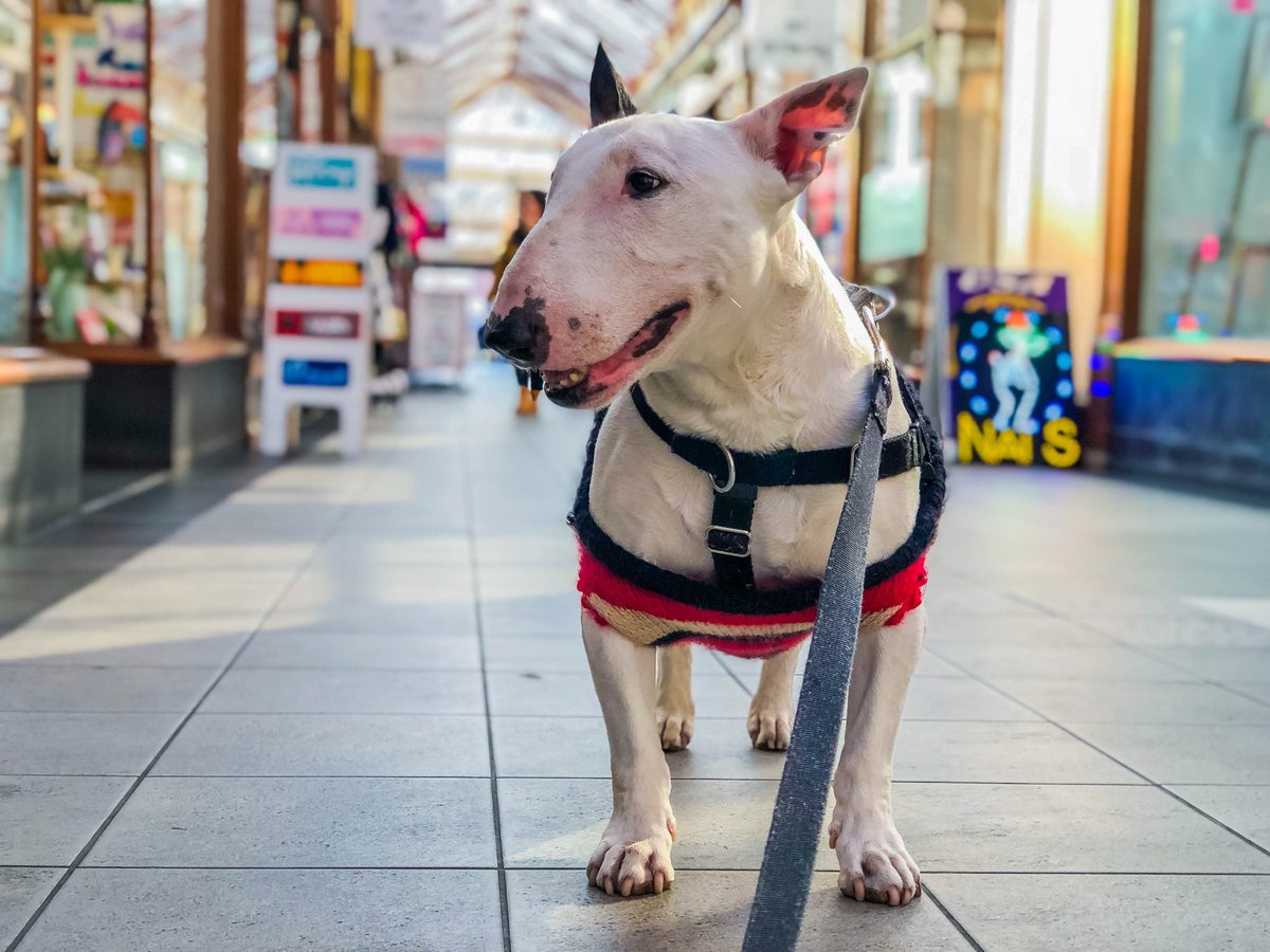 Last time we visited Great Yarmouth it was a ghost town but now that market day has arrived all the tourists come out! Check it out and see this ghost town come alive!  . .  https:// m.youtube.com/watch?v=k2fa3o ujnyU &nbsp; …   . . #dogtravel #doglover #dogmodel #doglife #mansbestfriend #bullterrier <br>http://pic.twitter.com/ARX7Qhb15a