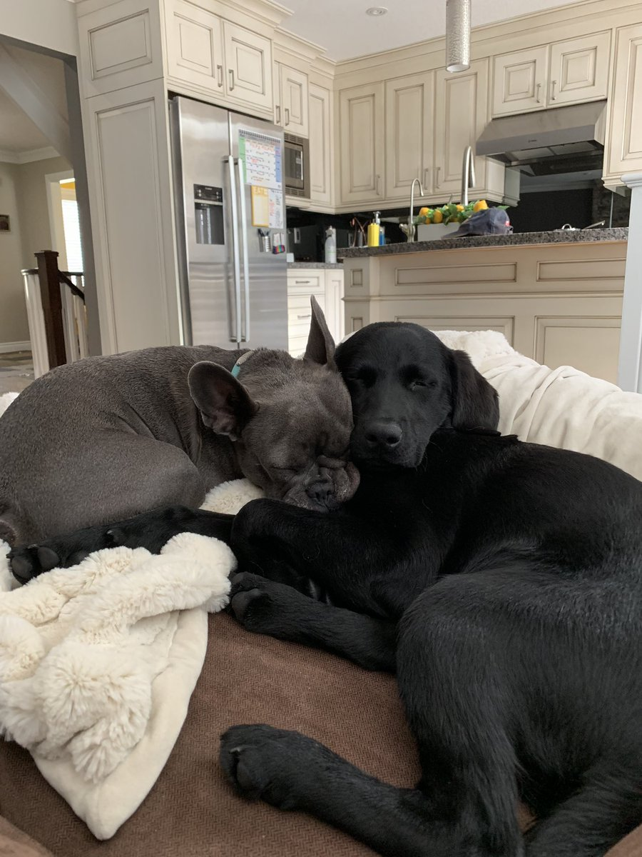 This is Blue and Lola. They take lots of cuddle naps together and the only time they're awake is when they're begging for pizza. They love being sisters! <br>http://pic.twitter.com/FABQtlPGjr