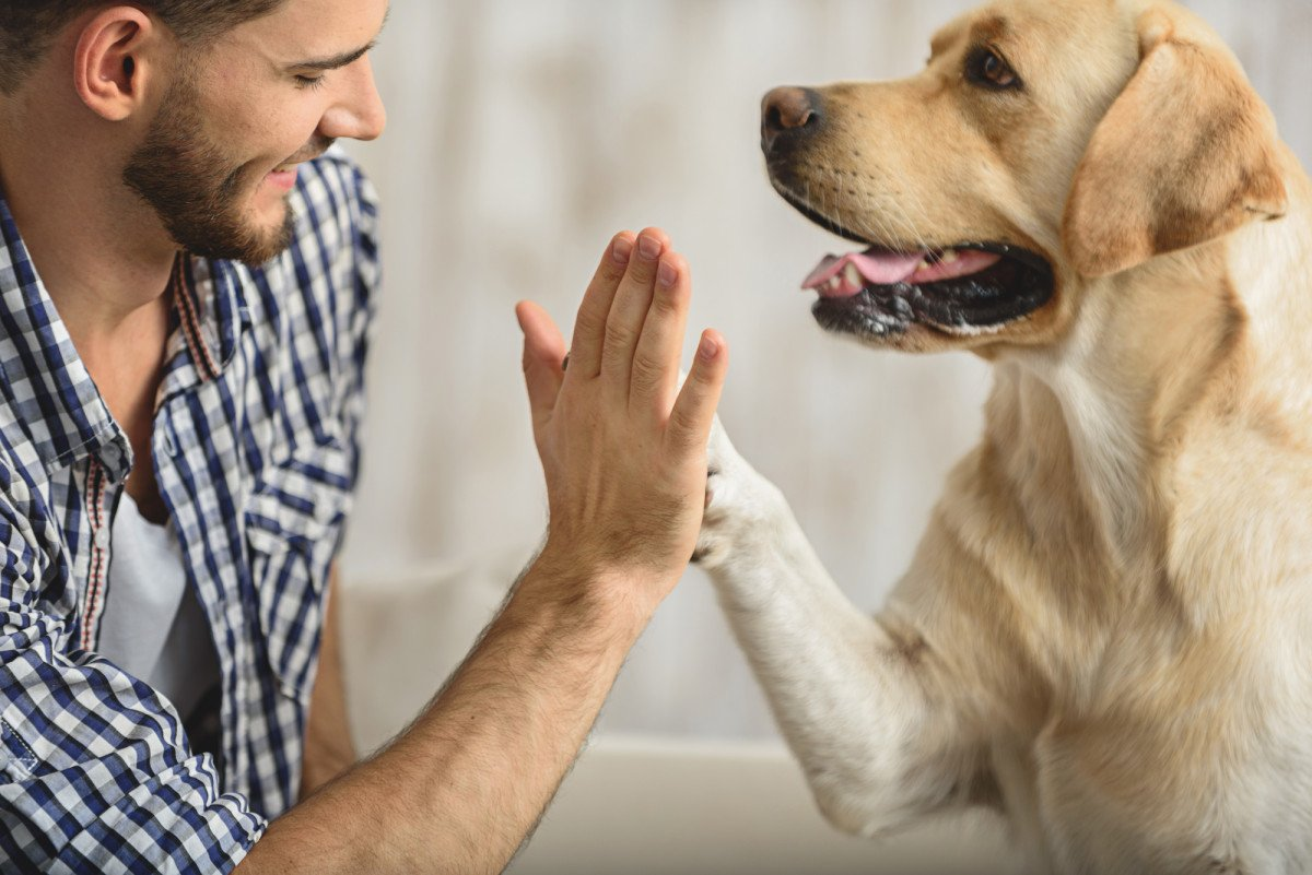 Dogs are capable of understanding the words you're saying to them  https:// nyp.st/2yJvUrP  &nbsp;  <br>http://pic.twitter.com/XeUpNOglYS