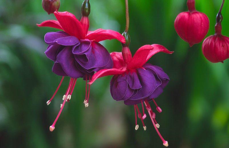 @FlowerchildRT @ster60 @justbeyou432 @FlowerSree @snowleopard56 @gamila2103 @encarnacion67 wish all a beautiful day 🌹💕☮️❤️