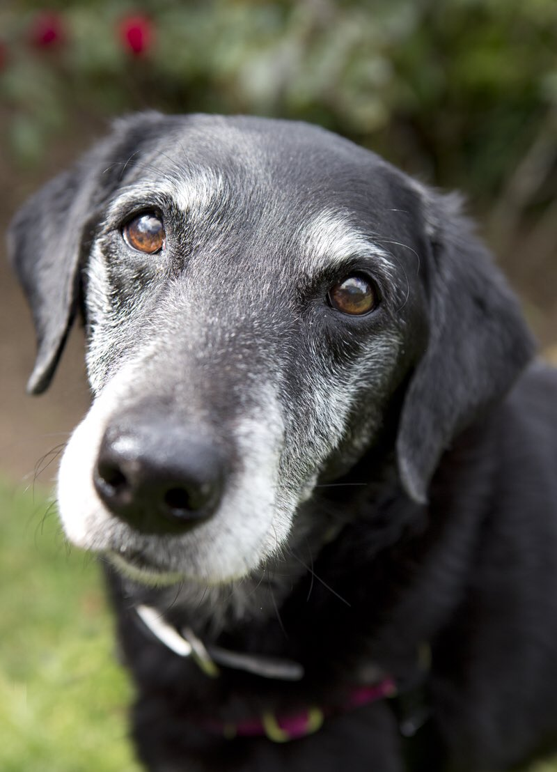 If the kindest souls were rewarded with the longest lives, dogs would outlive us all.  <br>http://pic.twitter.com/nT8Qk1vGva