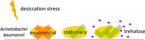 ebook visualization in science