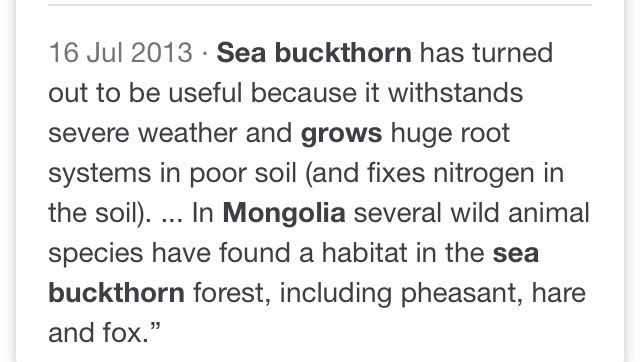 @ambrosen @cyberco I assume it grows coastally here but maybe the mountain / plain soil there is equally shallow?