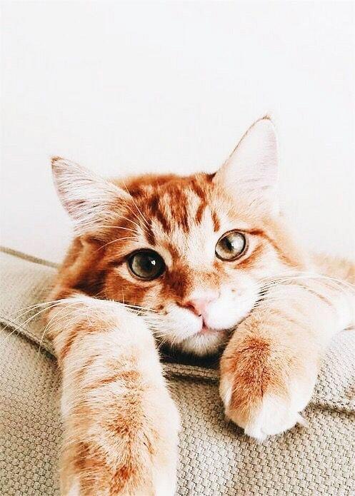 #ThursdayThoughts Le weekend approche à grand pas#cat #cats #cute #gingercat #weekend #Hello  - FestivalFocus
