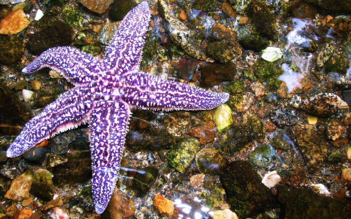 Морские звезды картинки красивые