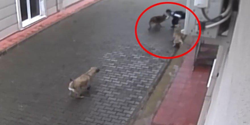 Aç kalan sokak köpekleri çocuğu parçaladı Dehşet anları kamerada... https://t.co/AXQl6sxjPe https://t.co/tZmrrOHrK7