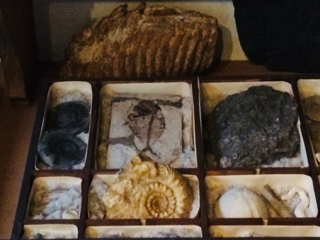 Some of Rembrandt's fossils