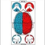 あなたはどっちの脳?10秒で分かる自分の脳のタイプで頭の使い方を知ろう!