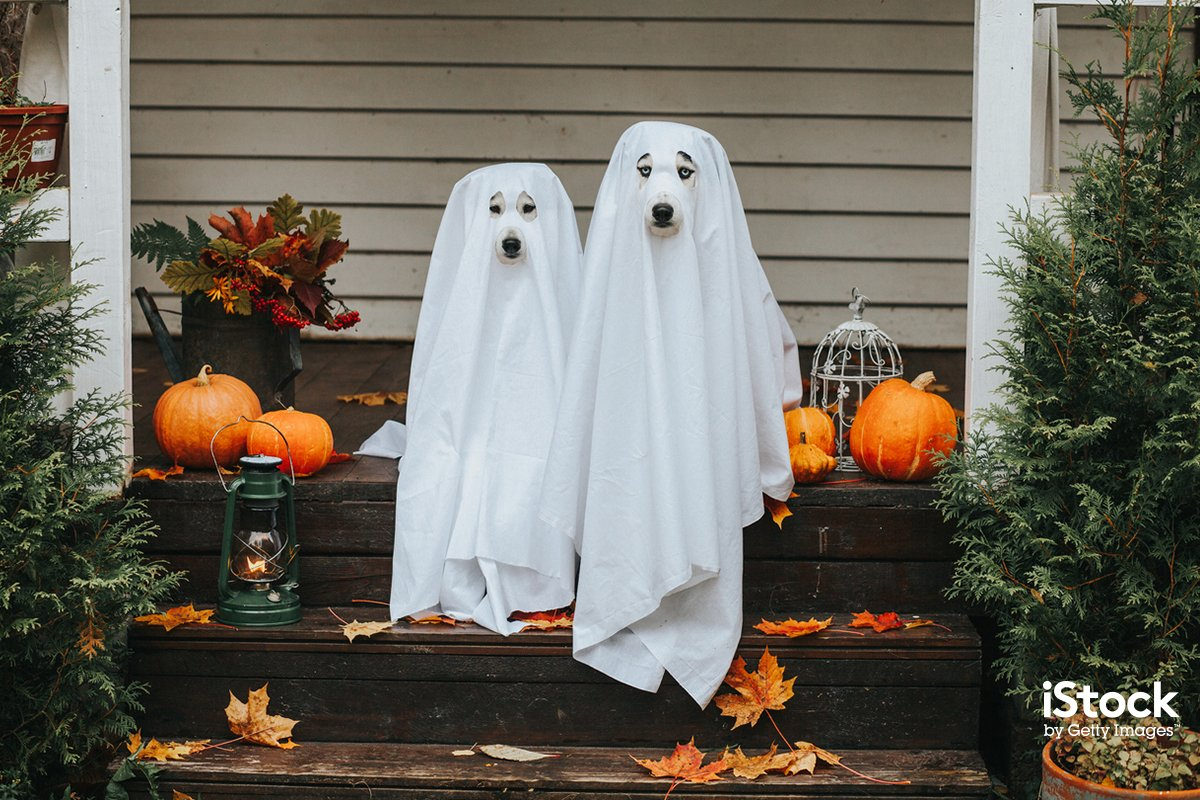 BOO! Happy Halloween 👻 📷: Sergeeva, #1049883642