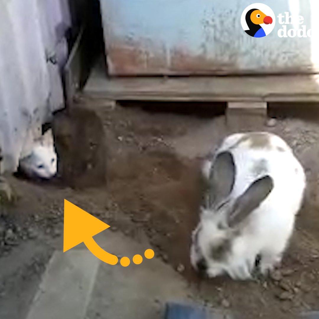 Just a bunny casually saving a cat.