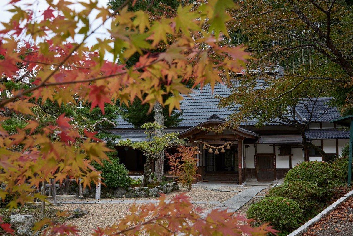 京都 紅葉 状況