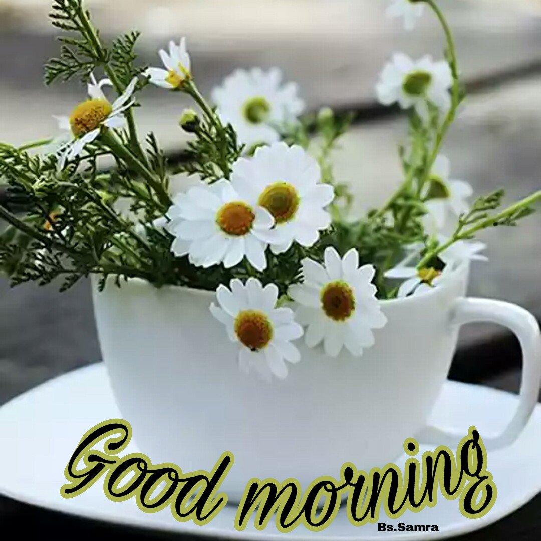 Доброе утро с ромашками картинки красивые необычные с надписями
