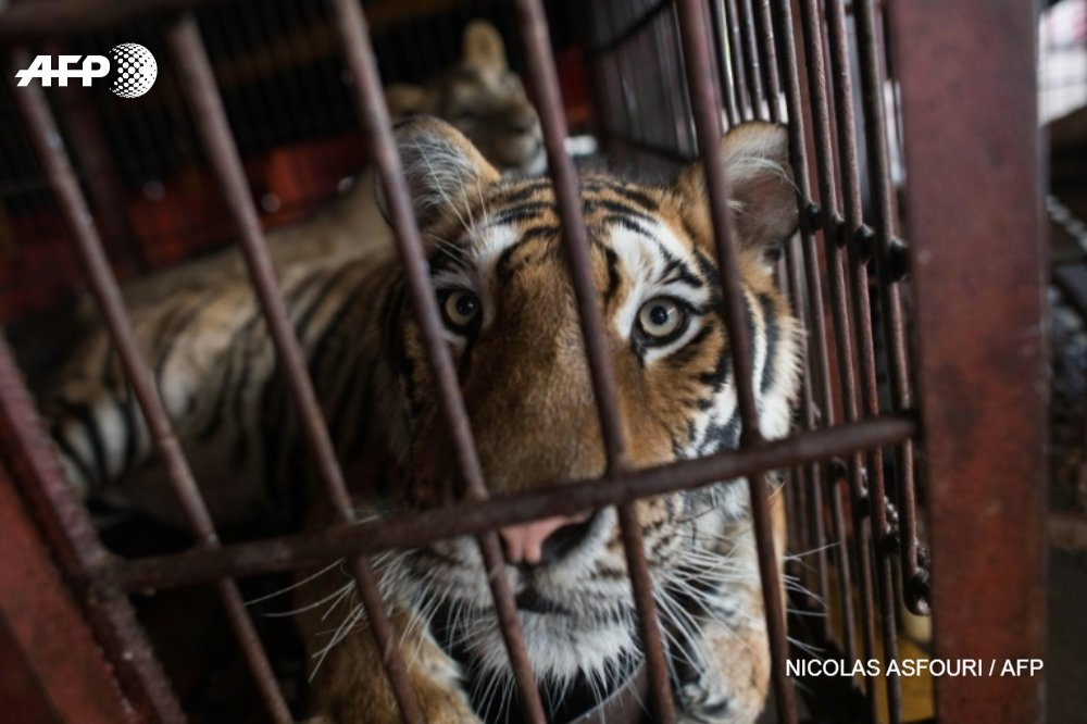 Le Portugal interdit les animaux sauvages dans les cirques https://t.co/zzt0gEhbgS #AFP