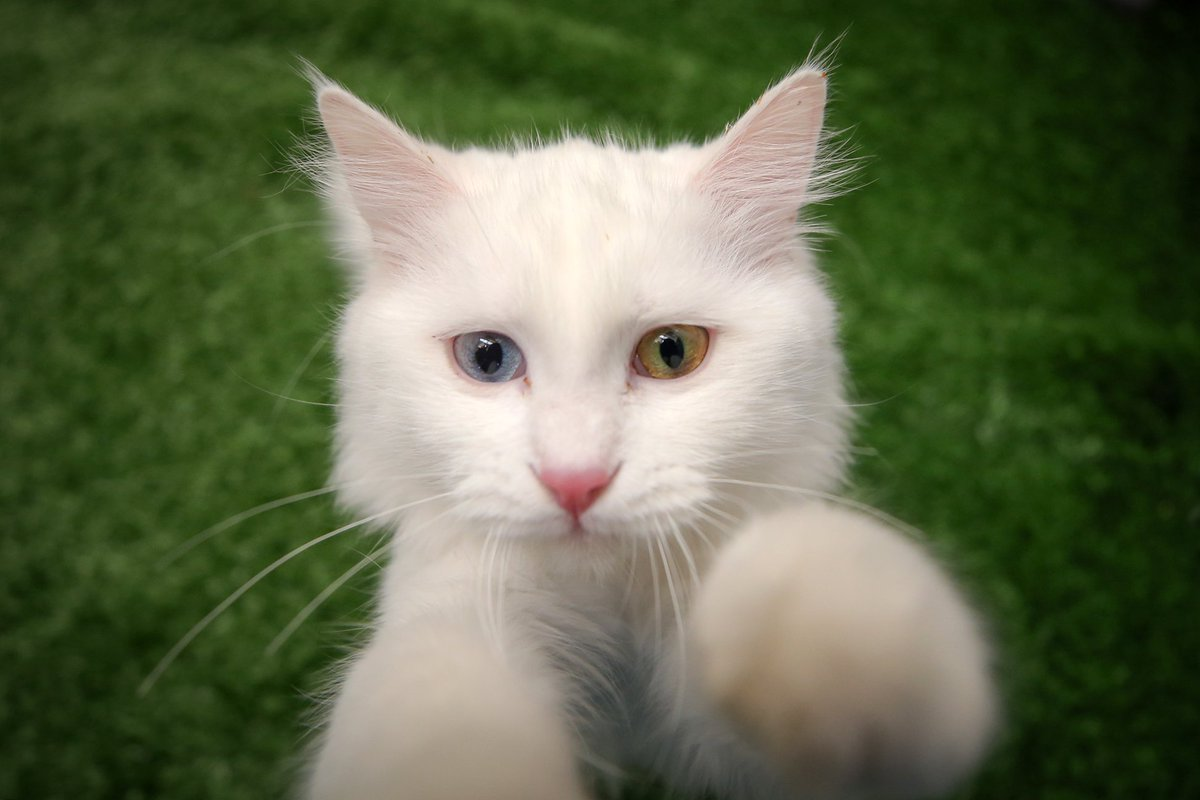 Качественная картинка кота главной