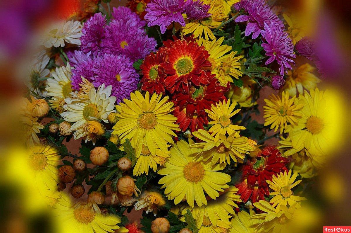 красивые осенние цветы картинки вертикальные большинстве случаев под