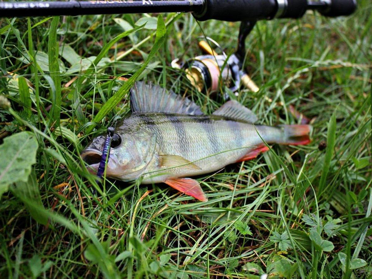 Рыбалка на окуней снасти