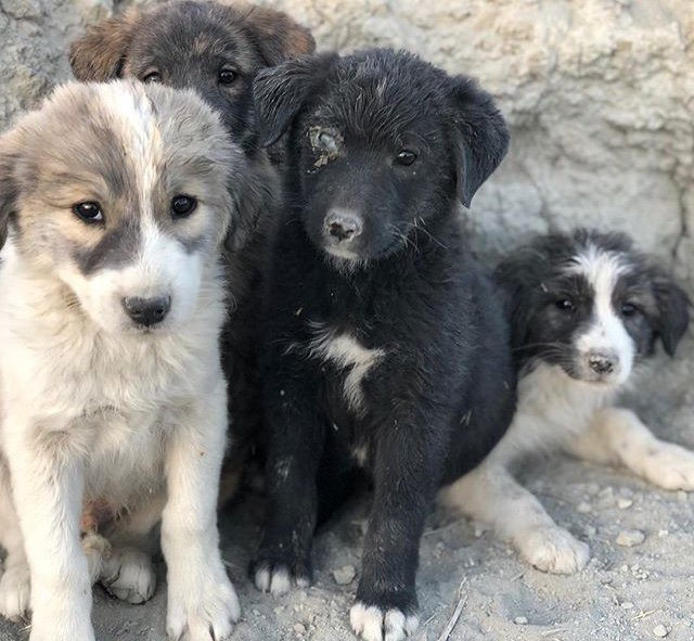 Everyone! Chris Jones, a fellow ultrarunner, is also a soldier currently stationed in Afghanistan. He has been posting about puppies they have rescued and the limited resources of the one official animal shelter in Afghanistan. We want to help them! (1)