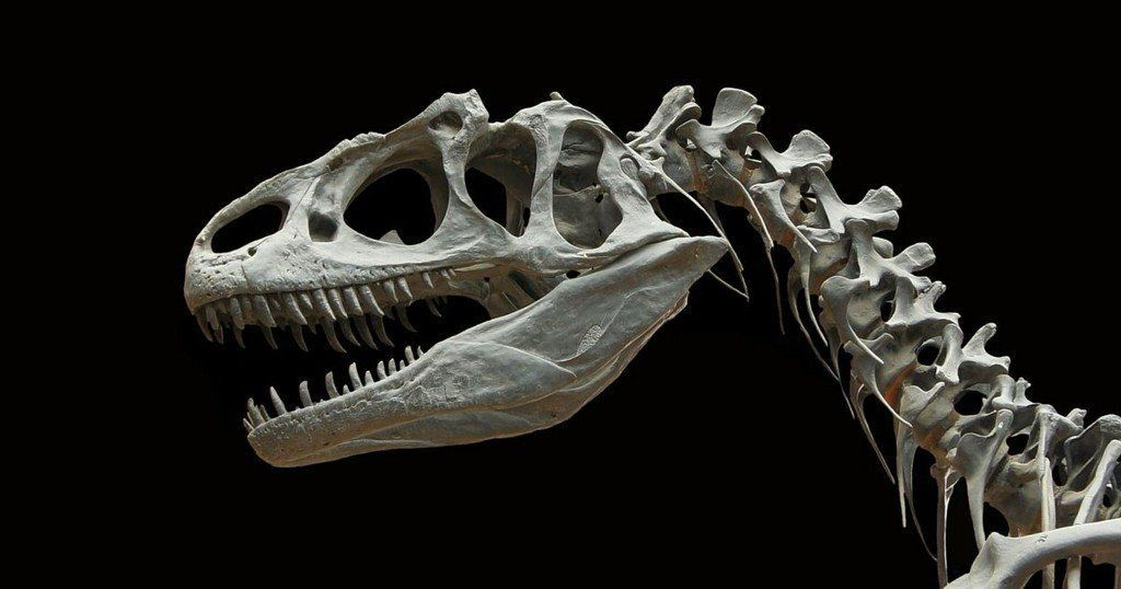 When and how did dinosaurs go extinct? https://t.co/Vd9i6sHbUw