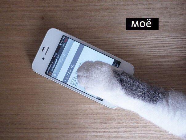 Котёнки, коты, кошечки и кошководы и... псы :-) - Страница 46 DqA9k04WsAAv-YF