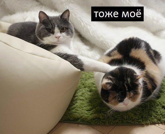 Котёнки, коты, кошечки и кошководы и... псы :-) - Страница 46 DqA9k1aXgAUC3_U
