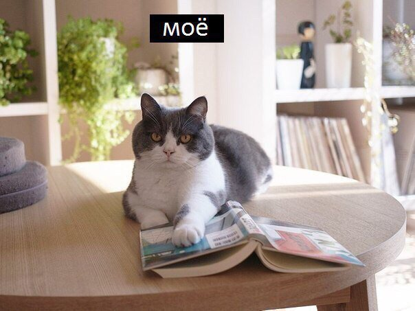 Котёнки, коты, кошечки и кошководы и... псы :-) - Страница 46 DqA9kzLX4AAh7Yk