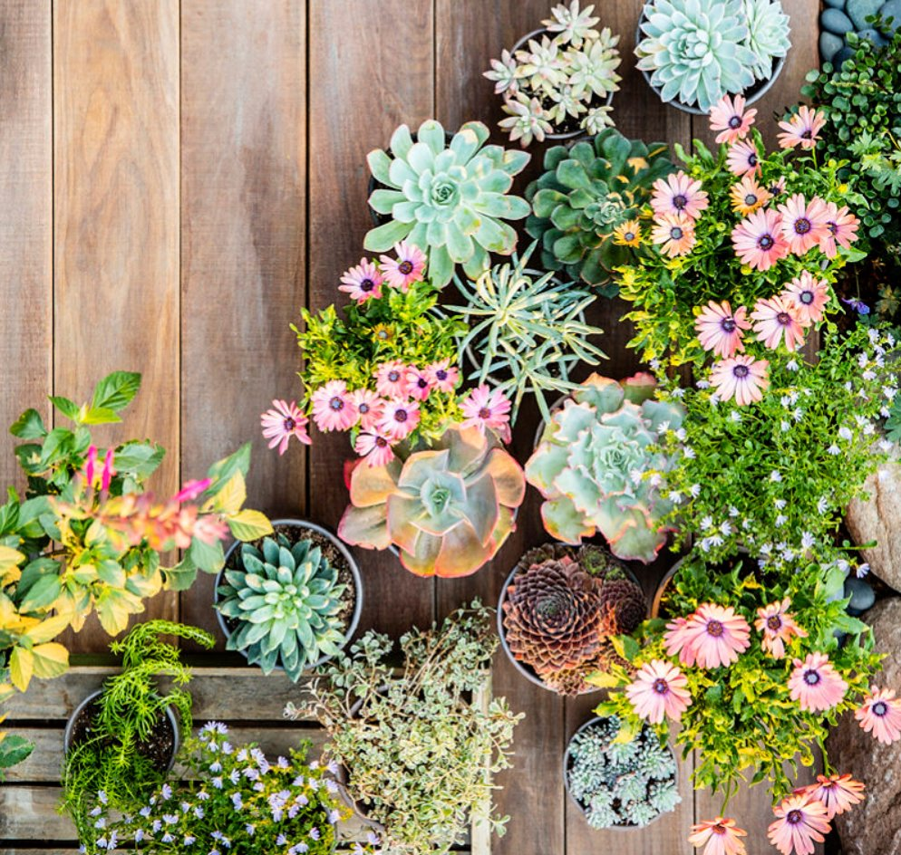 38 Ideas for Succulents in Containers: https://t.co/HS5SPuEWh1