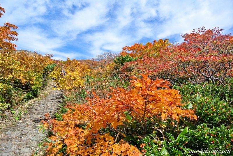 紅葉した栗駒山に宮城県側いわかがみ平から中央コースで登った記録です。平年より早い見頃に何とか間に合い、直前の台風で若干葉の痛みはありましたが、まずまずの紅葉でした。 https://www.our-hiking.com/mt.kurikoma2018_1.html…