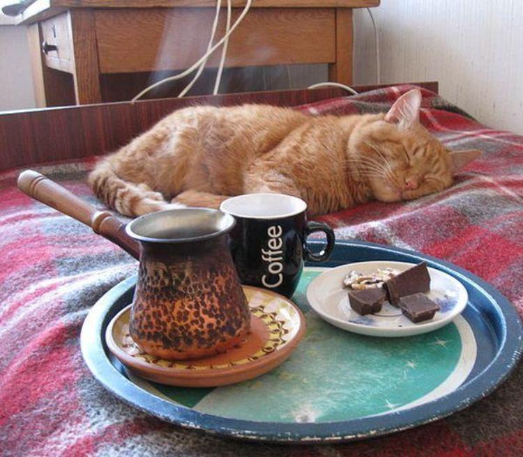 Картинки с добрым утром прикольные с кошками