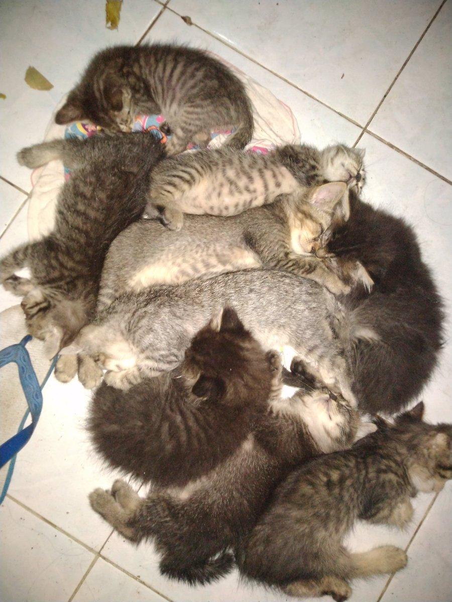 Download 89+  Gambar Kucing Rumahan Lucu Paling Baru