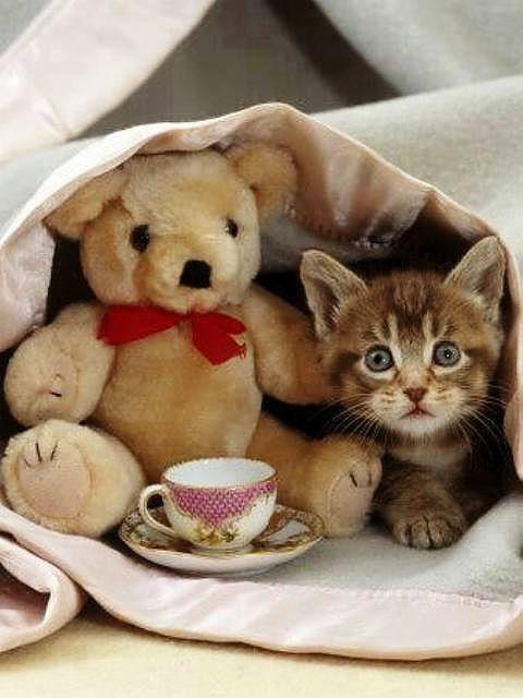 наш картинка доброе утро с котятами с настоящими котятами живем том отеле