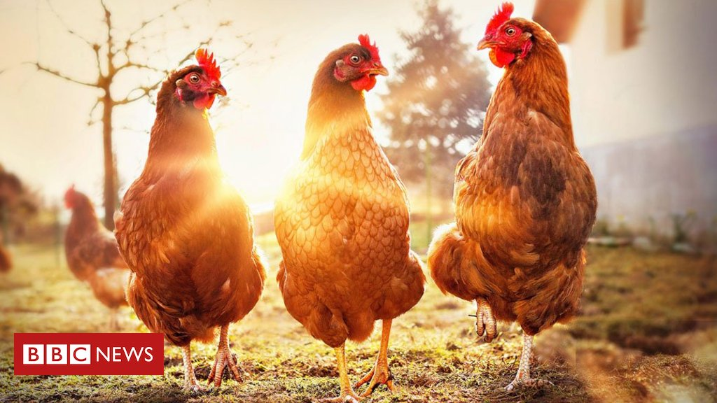 O frigorífico que produz carne de frango sem matar uma ave https://t.co/qSNd97jgnk #meioambiente