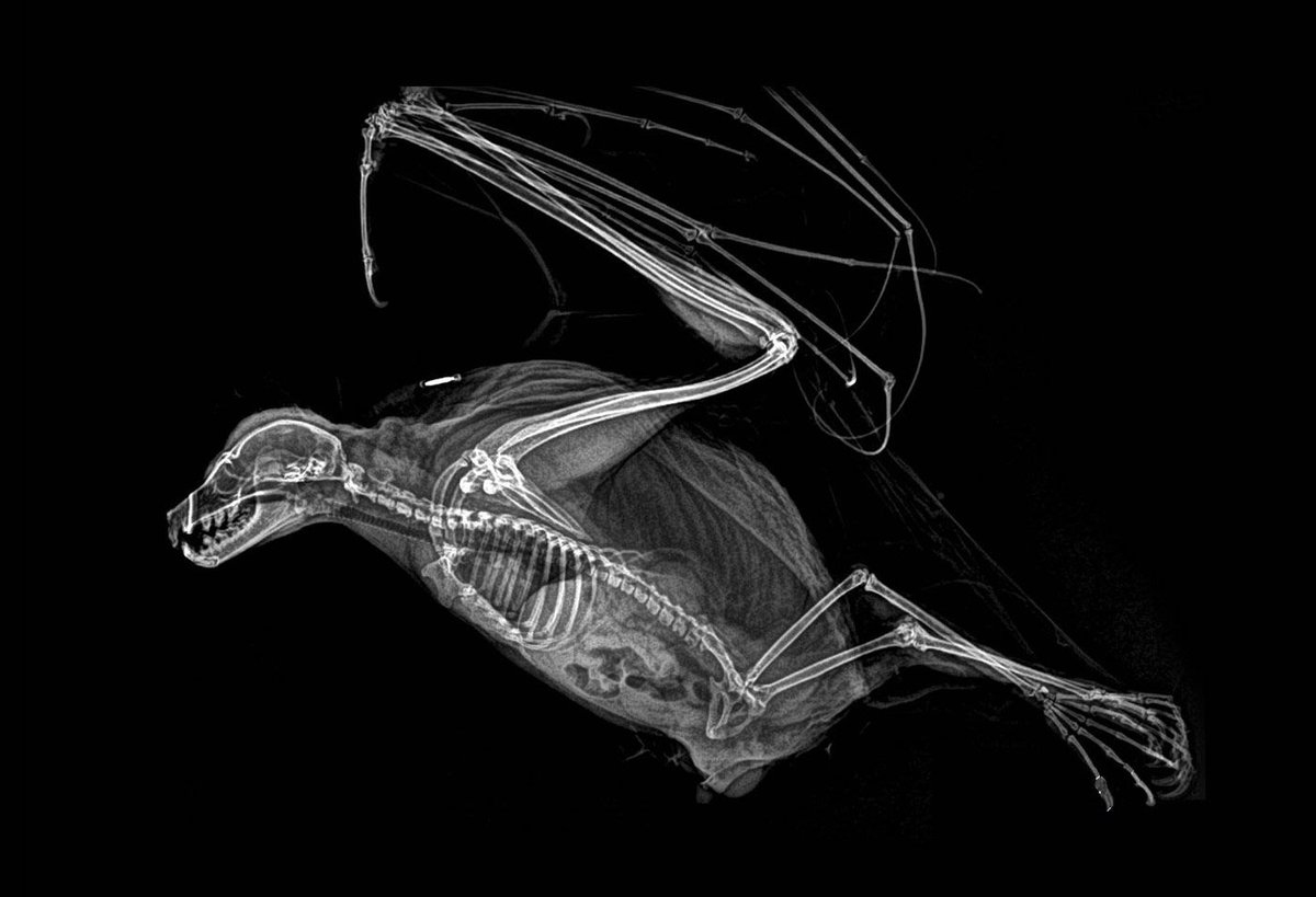 #Science #Art: spooky #XRays reveal the #bone structures of Oregon Zoo residents  ► https://t.co/EYoZDwMIJ7 via @Colossal