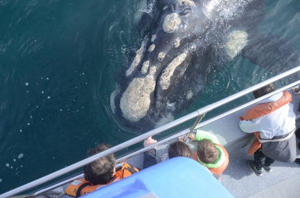 Contemplarlas nos permite conocer más de ellas y admirar su belleza. #ballenasenpiramides #whalewatch #puertopiramides