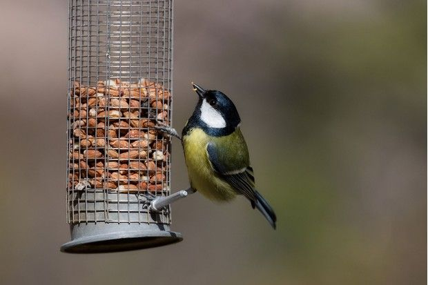 How To Prepare Your Garden For Autumn And Winter Birds Turn Your