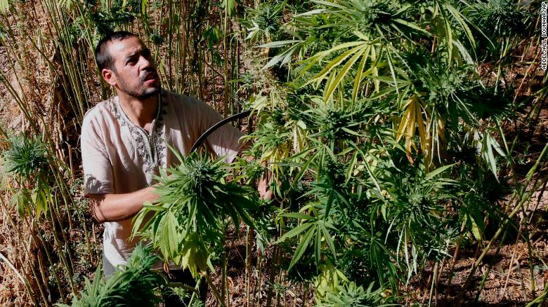 Canada's legalization of marijuana could hurt farmers in poorer countries https://t.co/Wu6tZ2F82s