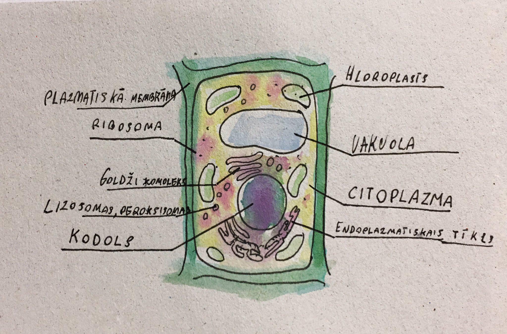 пекутся клетка растения названия покажу вам каких