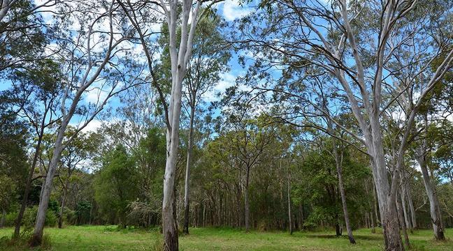 Mandelieu: Des agriculteurs luttent contre les vols d'eucalyptus https://t.co/3G3AklUUoz