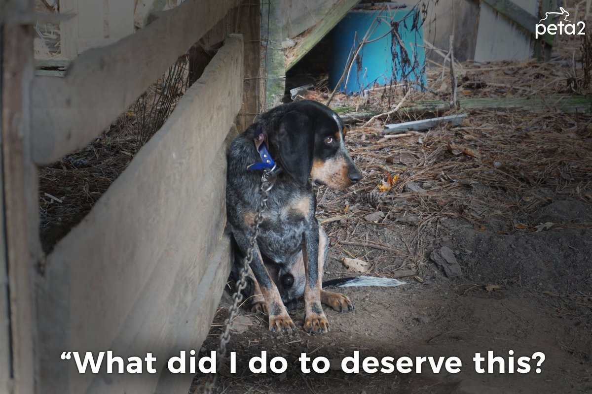 Dogs are family. They are NOT alarm systems or toys. They belong inside with you, not outside on chains. Treat them with compassion & respect 💓  #DogsAreFamily#BanChaining