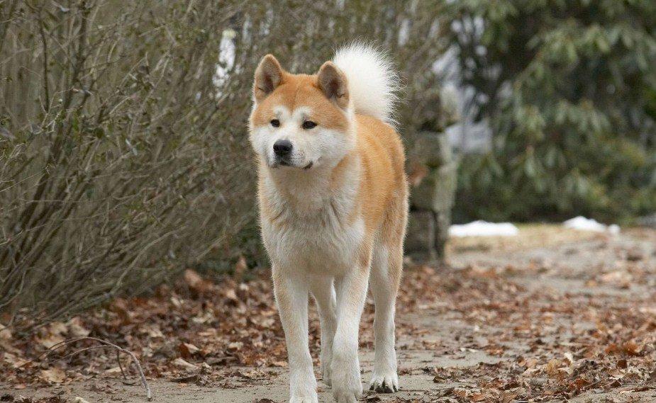 Dogs Wallpaper Muhamma58795619 Twitter