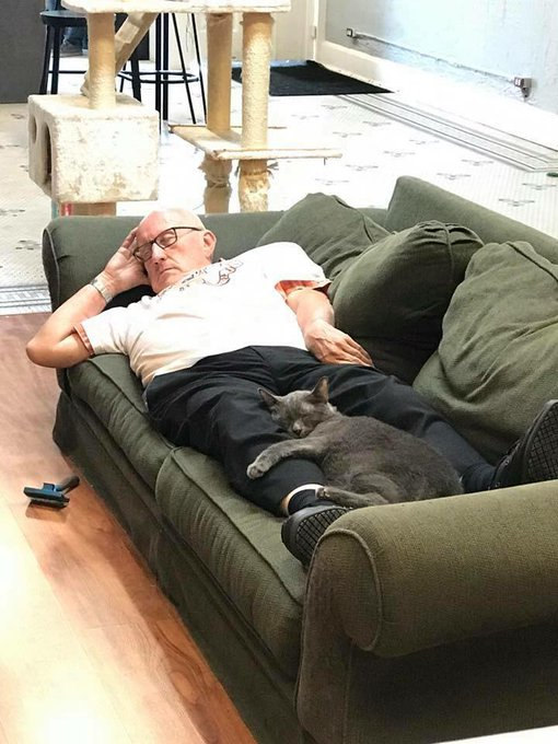 保護施設のソファーで横になって寝入ってるおじいさん おじいさんの足の間でネコも足に抱きつくようにして寝てる