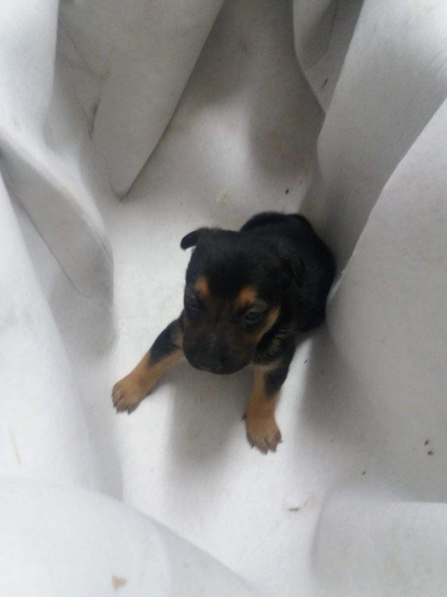 Cachorro rescatado ayer. Buscamos alguien que lo quiera adoptar. Se encuentra en el parque de #BomberosBurgos . Por favor RT