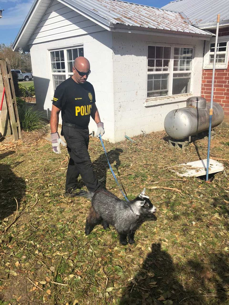 OPD officers in the Panhandle on #HurricaneMicheal relief cleared a tree from a damaged home and found a goat in a pen under the debris. Sgt Costa took the goat - who was not injured - for a much needed walk! <br>http://pic.twitter.com/giryLw1pZt