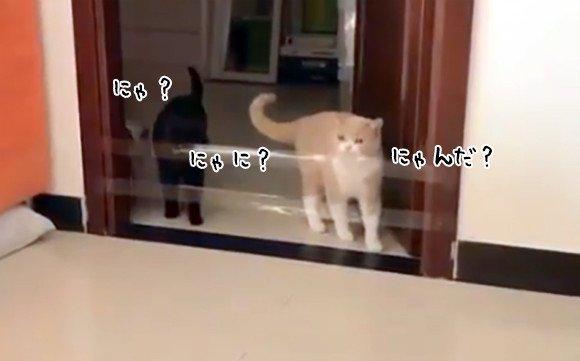 カラパイア : 猫の個体差がすごく良くわかる動画。4匹の猫によるドアの障害物対処法 https://t.co/aE8PuDrJ73