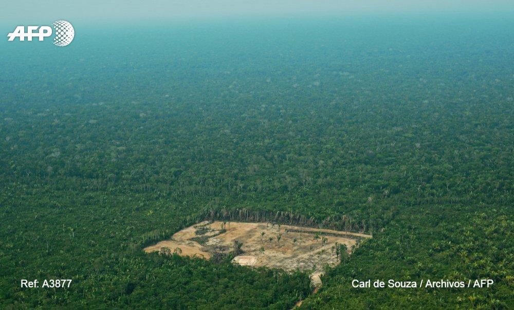 Temores por el futuro de la Amazonía con un gobierno de Bolsonaro en Brasil #AFP  https://t.co/uqrOFTi8e0