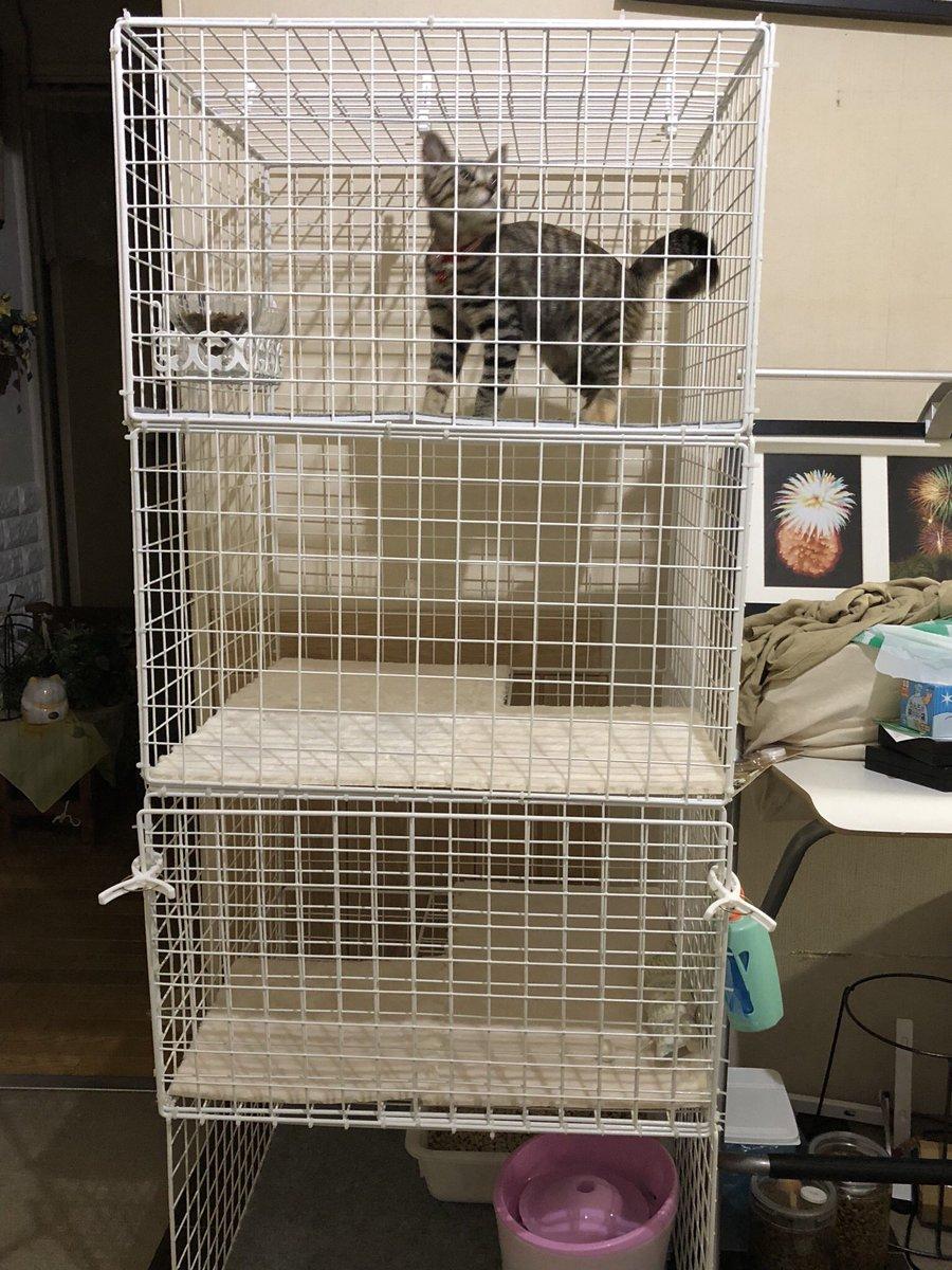 test ツイッターメディア - にゃんこさんに邪魔されながらなんとか形は完成しました(●´ω`●)  #猫好きさんと繋がりたい #DIY #ダイソー #ケージ https://t.co/8uDvRy3DPi